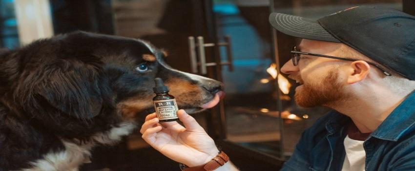 Die richtige Dosierung beim Hund